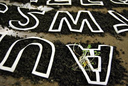 Poesía germinal / Instalación / Medidas variables / 2012
